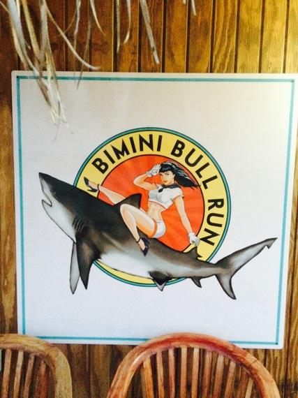 Bimini_bull_run