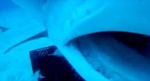 inside_tiger_shark_mouth