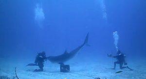 inside_tiger_shark_mouth_0