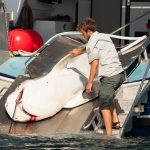 Shark Attack Prompts New Calls for Nets and Culling sharks