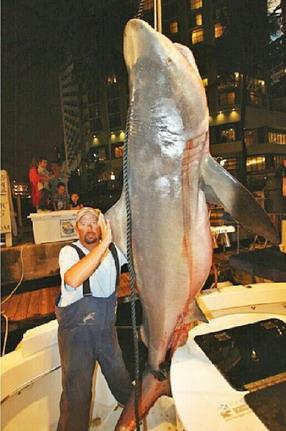 10 ft bull shark 624lb flordia