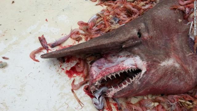 Goblin_shark_gulf_of Mexico