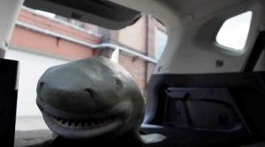 Bull_shark_fake