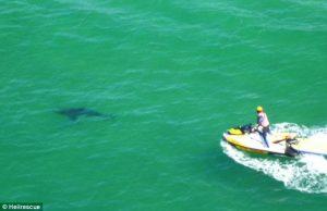 white_shark_byron_beach