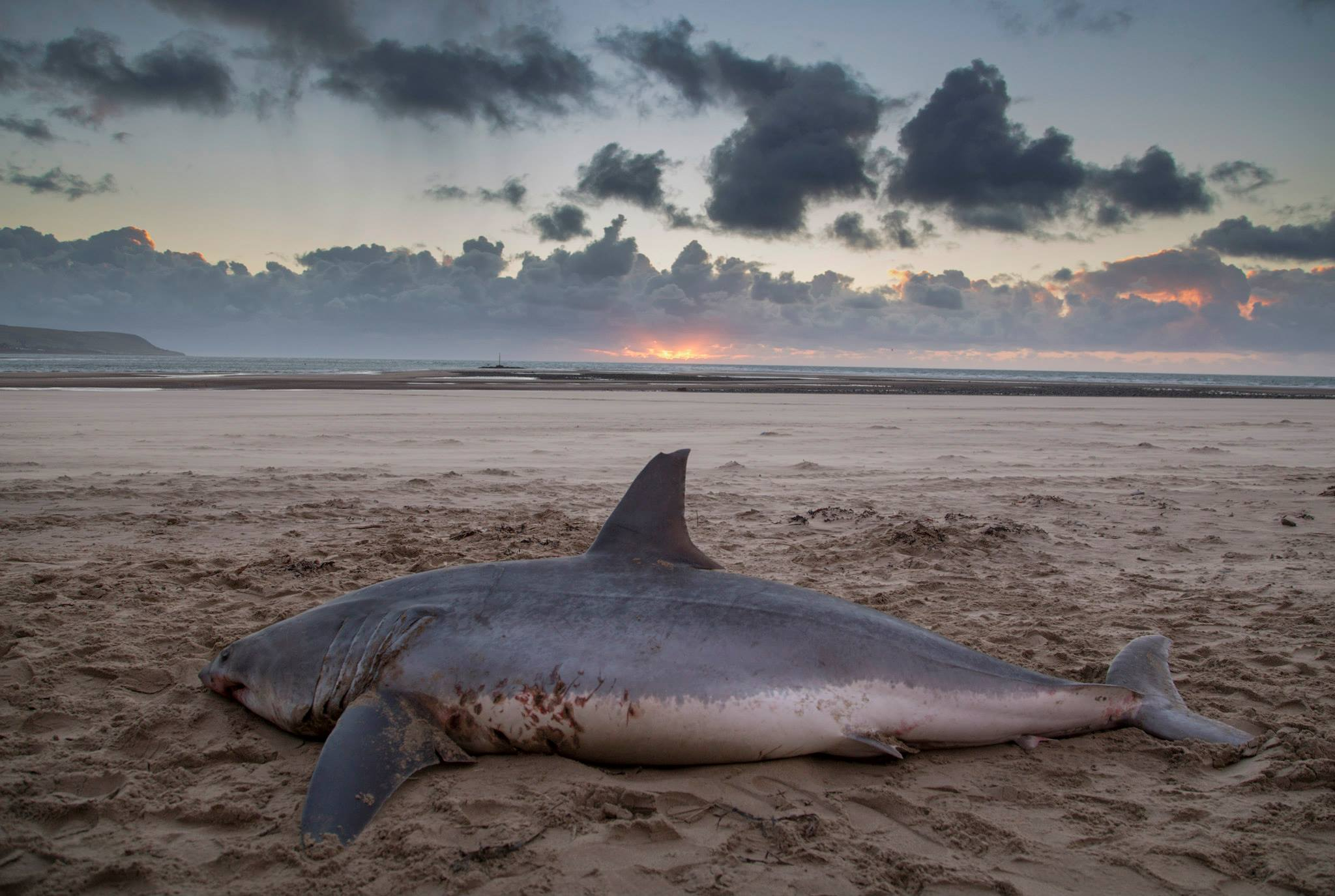 Shark Washed Up On Beach Uk