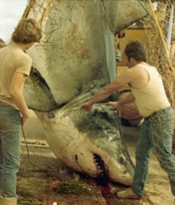 David McKendrick of Alberton, P.E.I. in 1983. (Canadian Shark Research Laboratory)