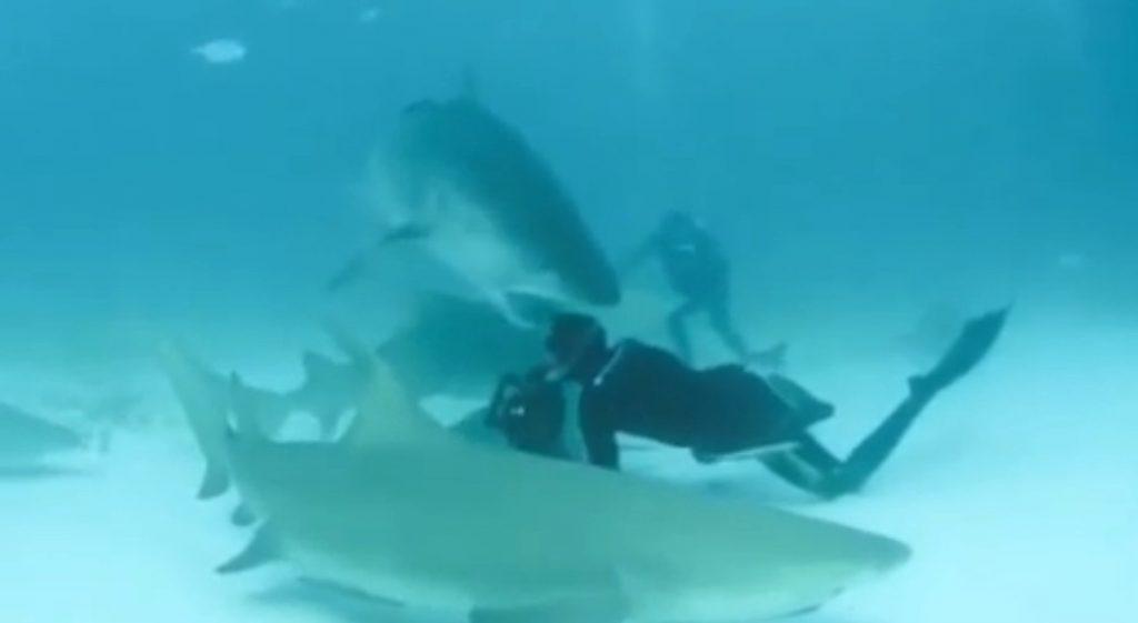 tiger_shark_bites_divers_head