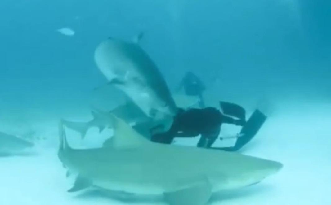 tiger_shark_bites_divers_head_2