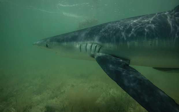 Mark Rackley's photo right before the shark bit.