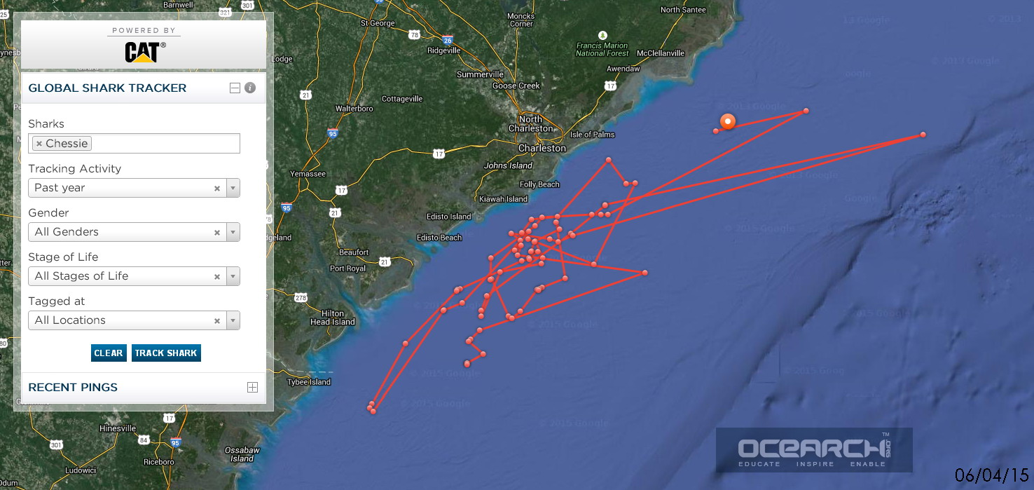 Chessie-12ft-tiger-shark-OCEARCH-tracking