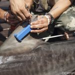 Ballina MP Disagrees with Shark Cull
