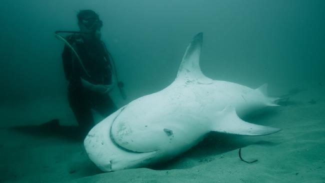 Nicole McLachlan with a dead shark on the sea bed.