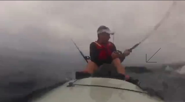 shark_kayak_attack_2