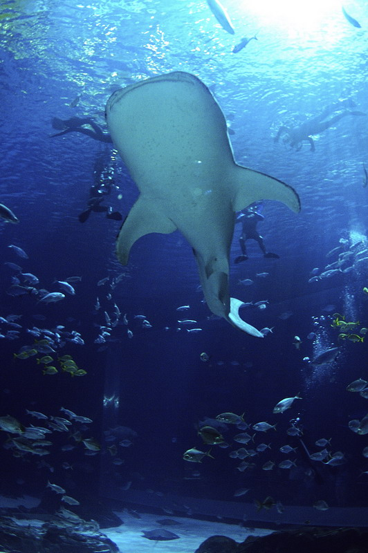 "See the sharks up close with the ""Journey With Gentle Giants"""