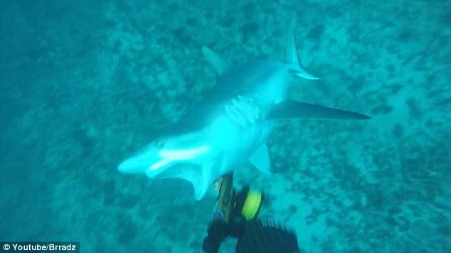 Australia_shark_attack_bite_2016_Brad_Vale_1