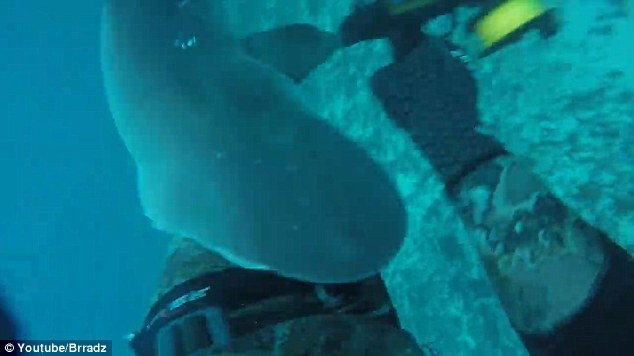 Australia_shark_attack_bite_2016_Brad_Vale_2