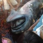 Has the 62nd rare megamouth shark been found?