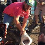 Updated: Authorities Seek Man Who Posed With Great White Shark
