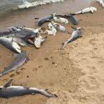 57 dead sharks found on an Alabama Beach