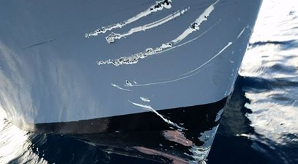 Teeth marks left in Keith Poe's damaged boat. Photo Keith Poe Facebook