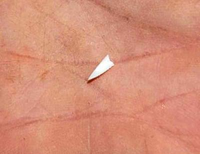 Lower jaw tooth fragment found in Davis' boat Photo: Pelagic Shark Research Foundation