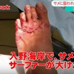 Surfer Bitten by A Shark in Japan?