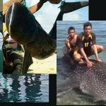 A Sad Day For Whale Sharks