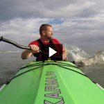 Video: Shark Bites Kayak Paddle in Florida