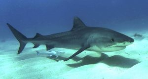 Shark attack prevention update