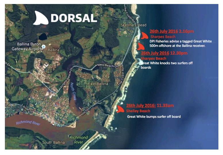 dorsal_shark_reporting_app