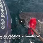 Video: Fisherman Fights Off Massive Great White Shark with a Broom