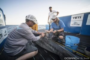 Updated:OCEARCH-tagged Tiger Shark Lexi Dead?
