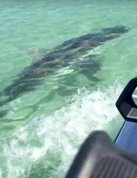Great white shark bites jet ski