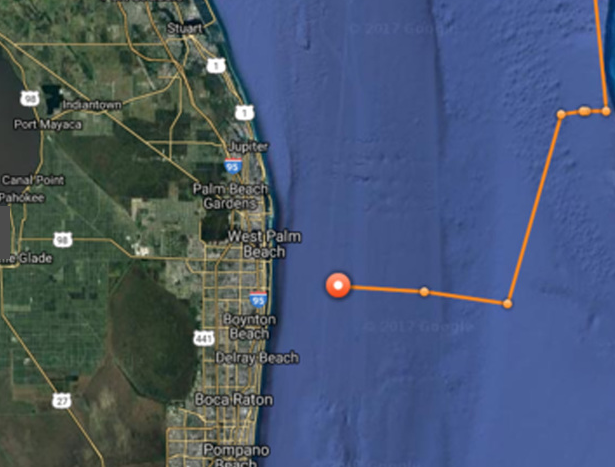 Great White Shark Filmed Off Florida Coast  U2013 Tracking Sharks