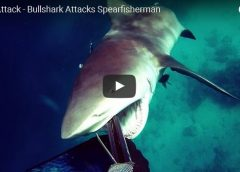 Kerry Daniel_bull_shark_attack_2017_New_south_wales_video_Great_Barrier_reef