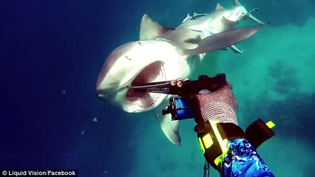 Kerry Daniel_bull_shark_attack_2017_New_south_wales_video_Great_Barrier_reef_