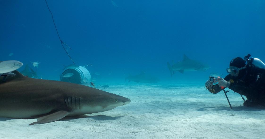 Christian Kemper_tiger-Beach_shark
