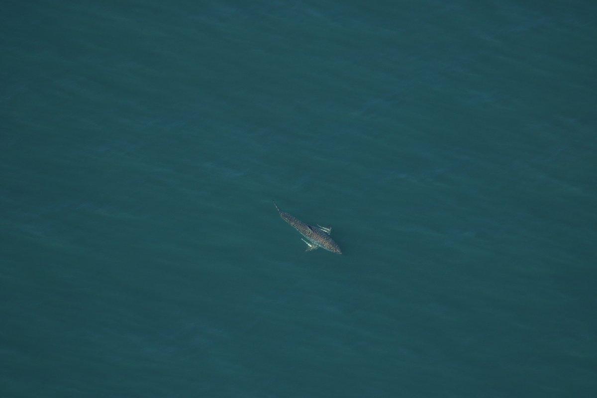 Half Eaten Shark Washes Ashore At New Smyrna Beach