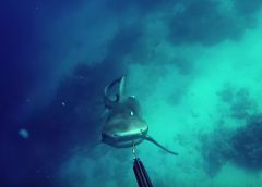 Kerry Daniel_bull_shark_attack_slow_motion