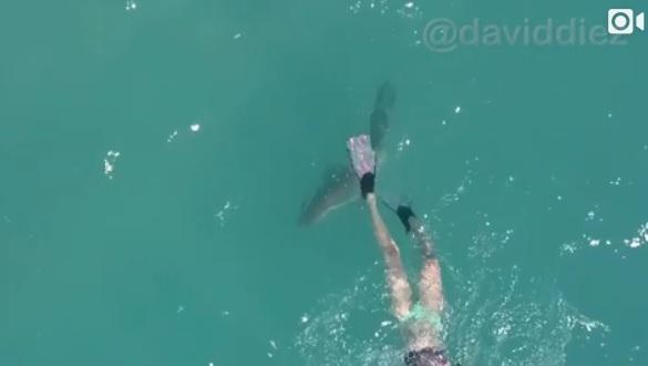 black tip shark bite - photo #35