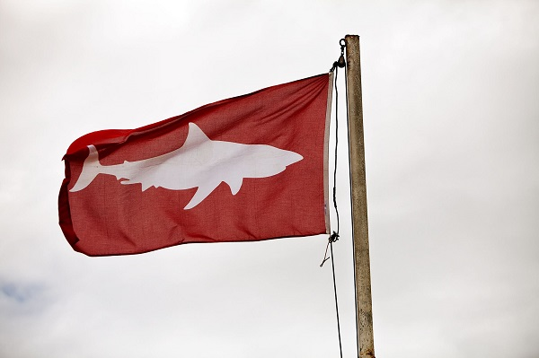 Christian_Kemper_why are we scared of sharks_flag