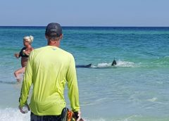 Stephanie Stevens Adcock_Okaloosa Island_Beach_sharks_2017