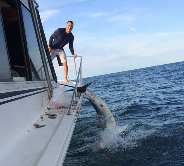 mako shark on boat bow