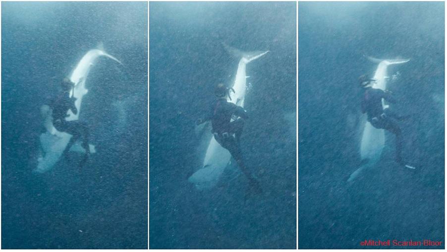 2018_shark_attack_Australia_NSW_Callum Stewart