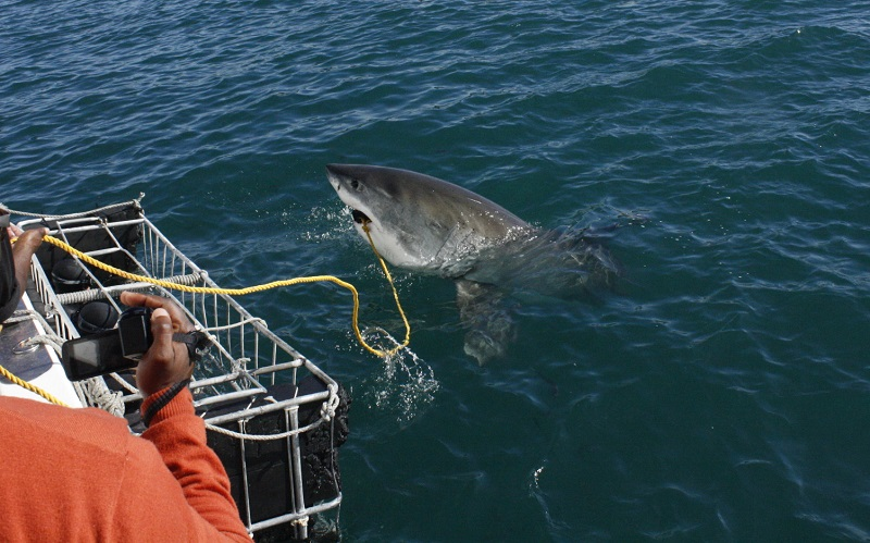 Alex_wright_working on a shark cage diving boat_Mossell_bay_South_Africa_3