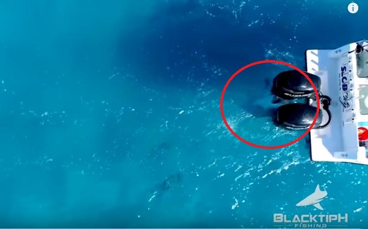 10-foot Bull shark attacks fishing boat off Florida