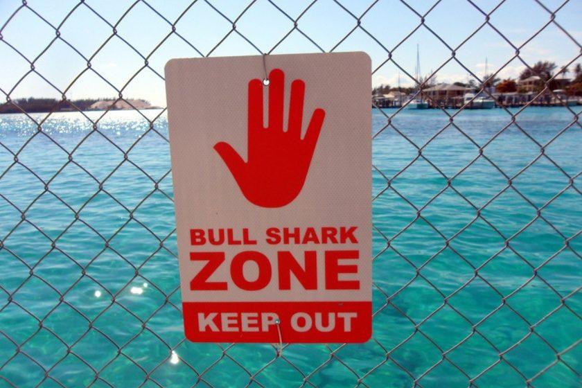 no swimming sign warning of bull sharks