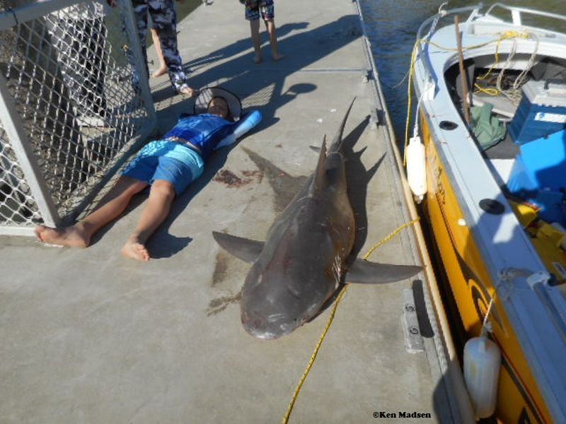 Six-foot bull shark lands in family's fishing boat