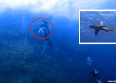 Brothers Islands Egypt shark attack videographer sets the record straight