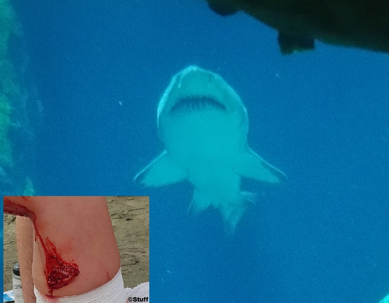 Shark bite reported in New Zealand Oreti Beach